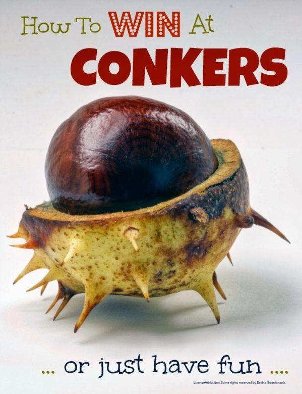 Conkers - conker fun and secret tips to ensure you win at conkers everytime :-)