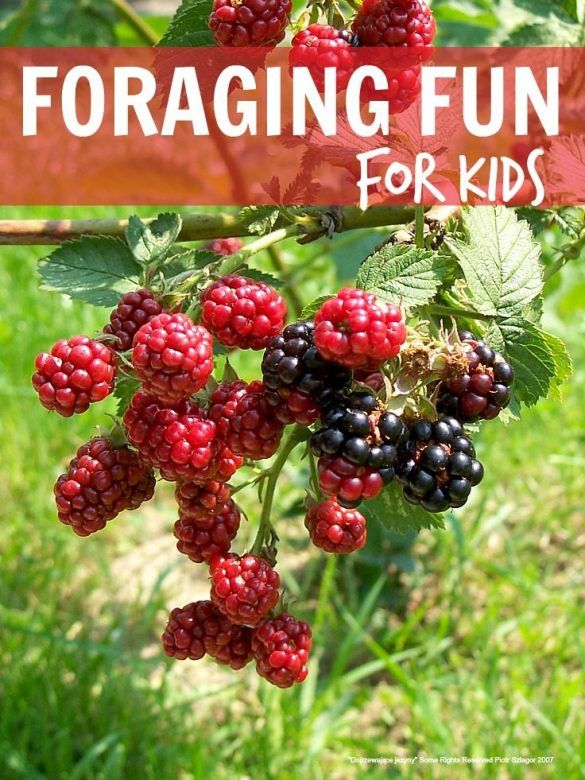 Foraging fun for kids ... picking everything from blackberries to damsons, crab apples, rosehips and more, such a lovely fall activity