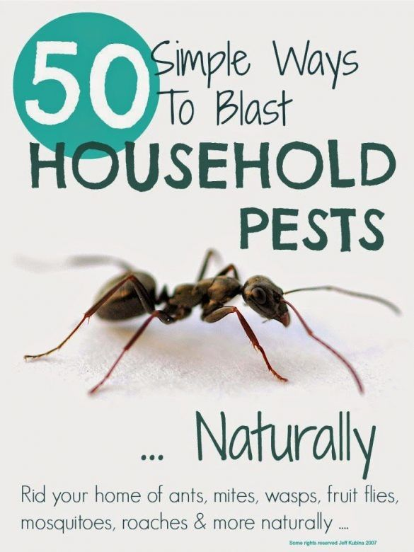 How to get rid of household pests naturally