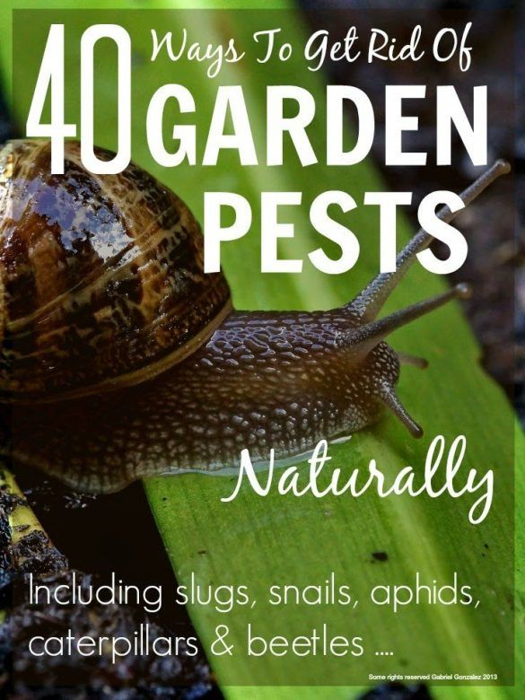 Get rid of garden pests naturally mums make lists - How to get rid of slugs in garden ...