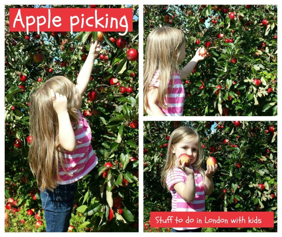 Fun stuff to do in London with kids ... fruit picking