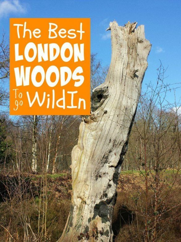 London woods with kids ... the best London woods for family days out