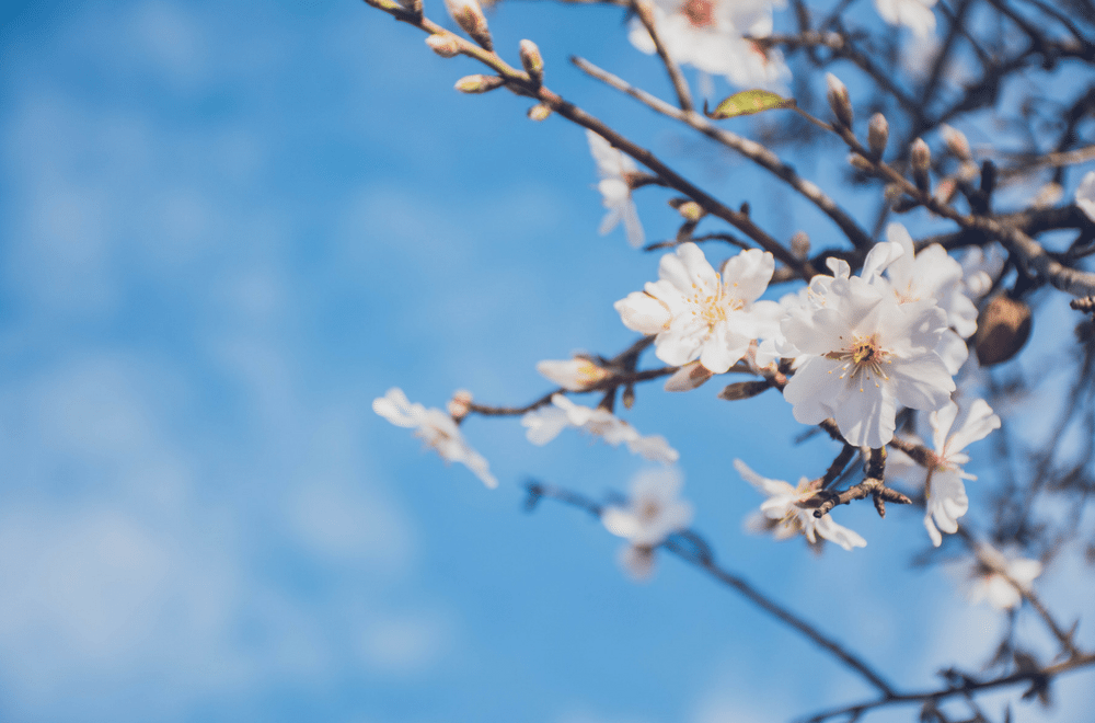 Spring cleaning guide by Mums Make Lists - an easy to follow guide to spring cleaning your home